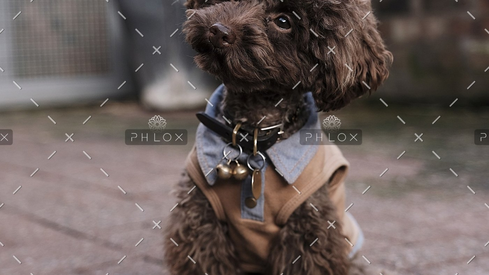 demo-attachment-511-the-poodle-gang-369918-unsplash